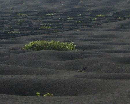 Tierras de cultivo de la vid, en la zona de La Ger�a.