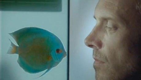 spot mercedes-benz clase m no somos peces